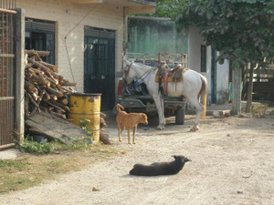 Day2_horse_dogs