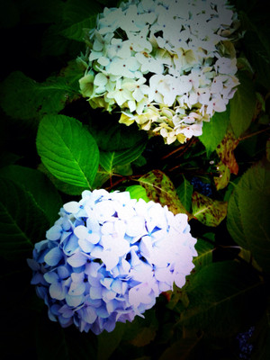 Color_of_summer